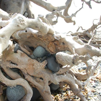 Driftwood Roots and Rocks